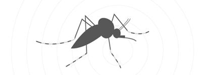 cover-zanzara