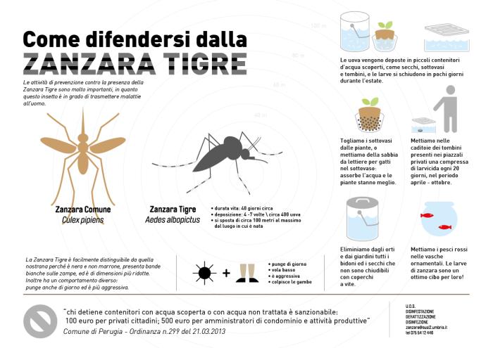 infografica zanzara tigre