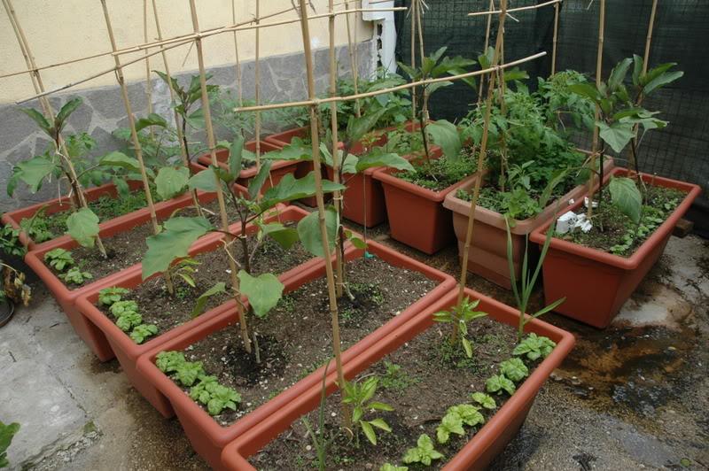 L orto nei vasi salute e benessere a misura di balcone for Vasi per balcone